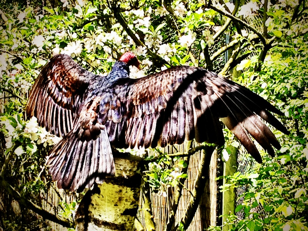 Amazing vulture showing his bird penis to the world.