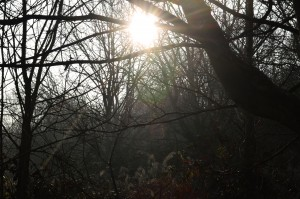 Sun amongst the undergrowth