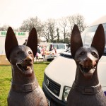Double dogs. £250 for the pair...
