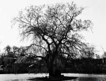 Evil duck pond tree
